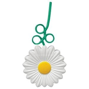 Daisy Cup - KGNVD54